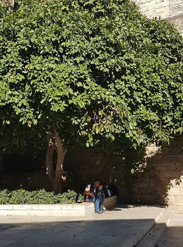 Palma de Mallorca fructe exotice
