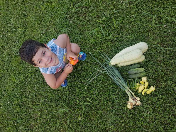 Grădina cu legume