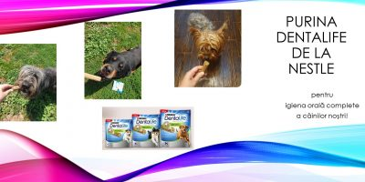 Purina Dentalife de la Nestle pentru igiena orală completă a câinilor noștri!